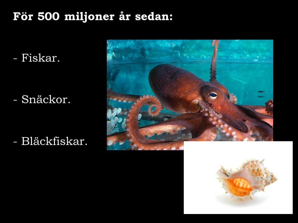För 500 miljoner år sedan: Fiskar. Snäckor. - Bläckfiskar.