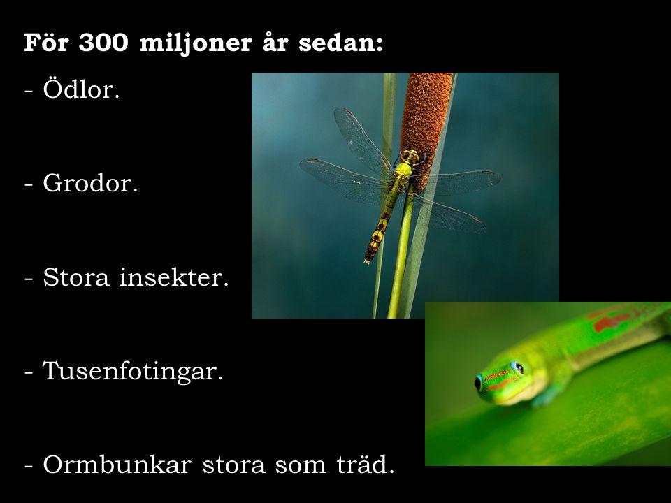 För 300 miljoner år sedan: Ödlor. - Grodor. Stora insekter.