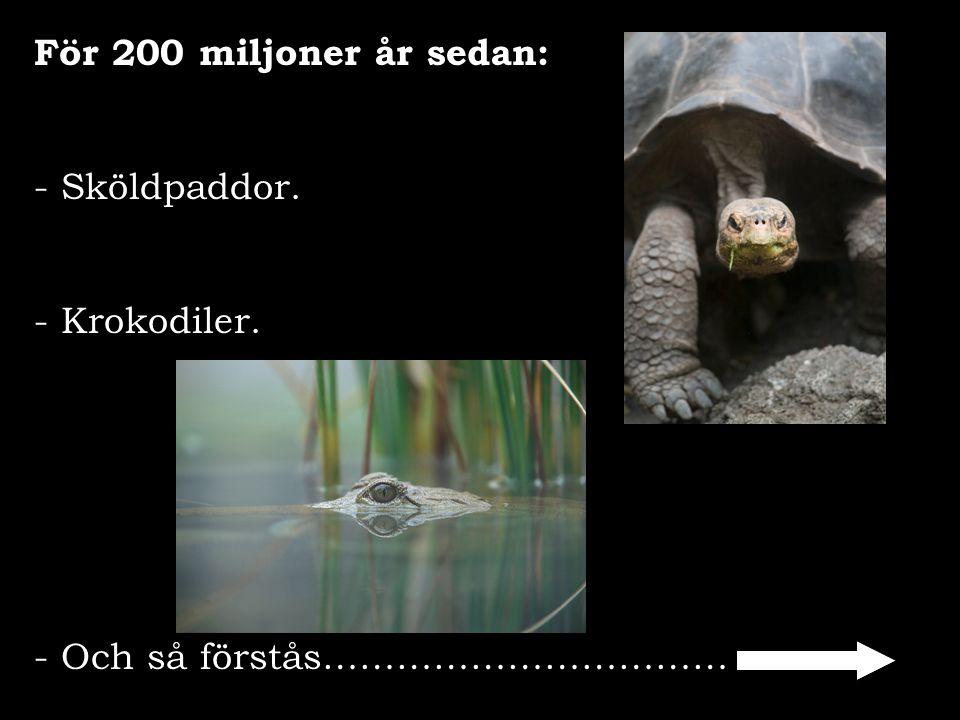 För 200 miljoner år sedan: Sköldpaddor. - Krokodiler. Och så förstås……………………………