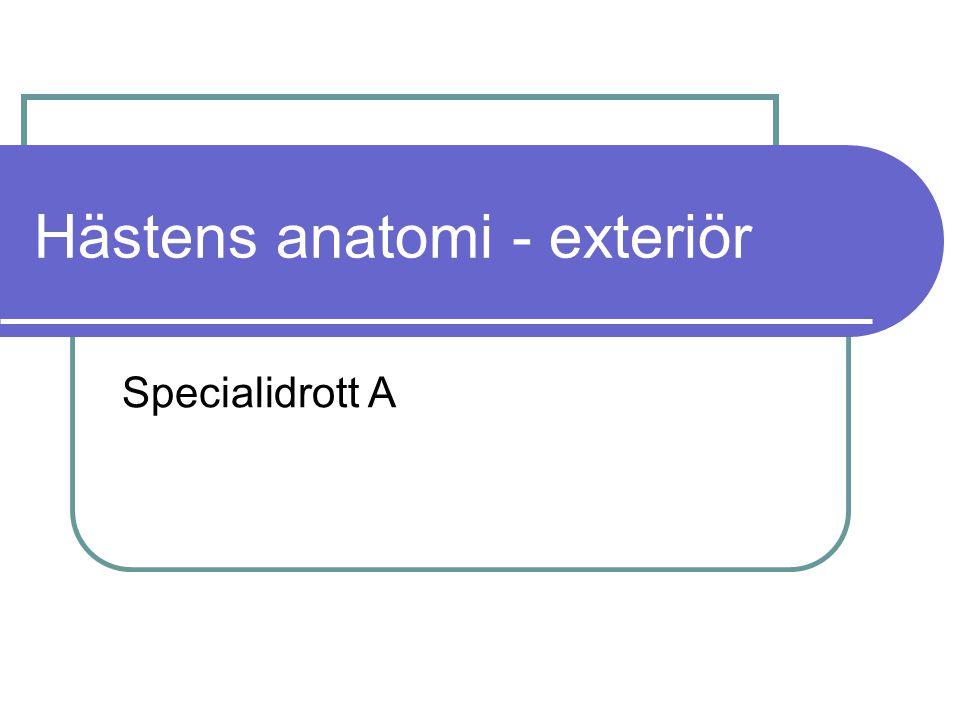 Hästens anatomi - exteriör