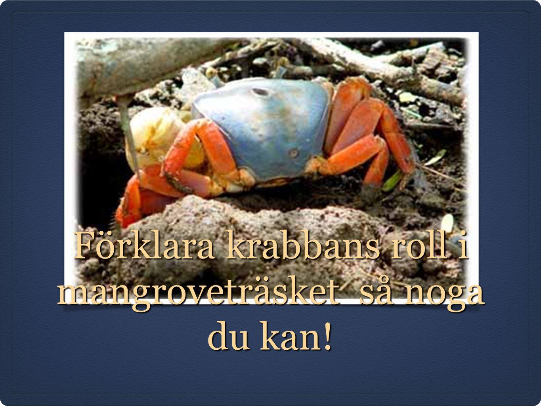 Förklara krabbans roll i mangroveträsket så noga du kan!