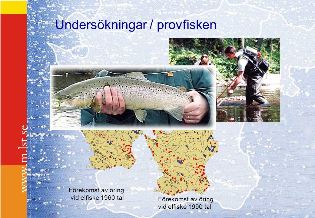 Undersökningar / provfisken