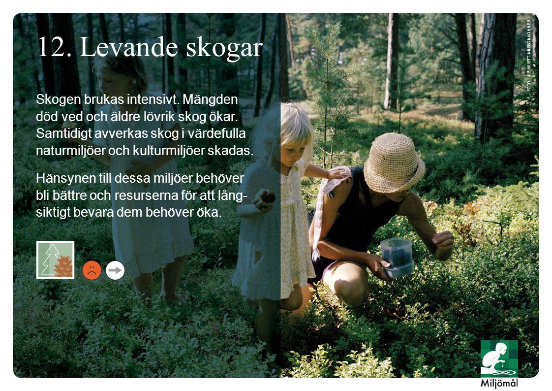 12. Levande skogar foto: Ulf Huett Nilsson/JOHNER.