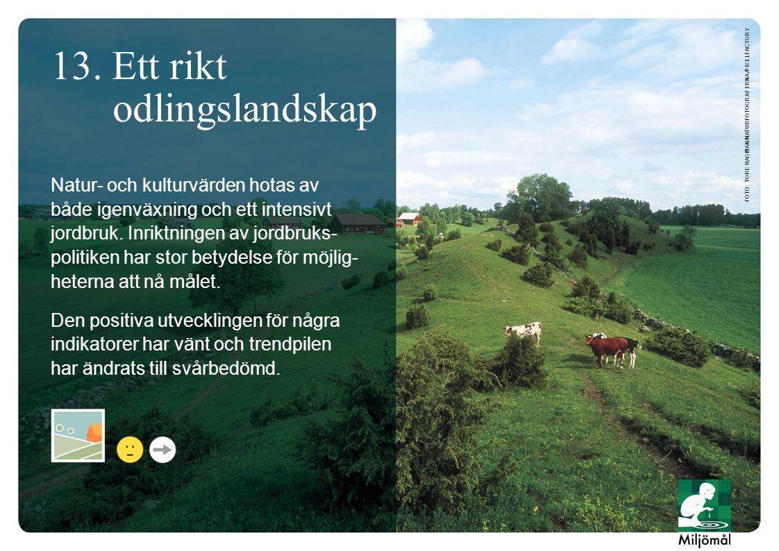 13. Ett rikt odlingslandskap