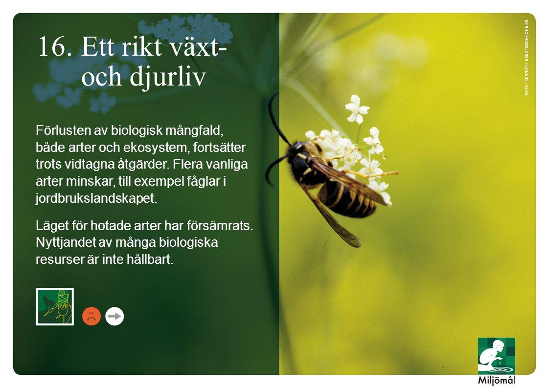 16. Ett rikt växt- och djurliv