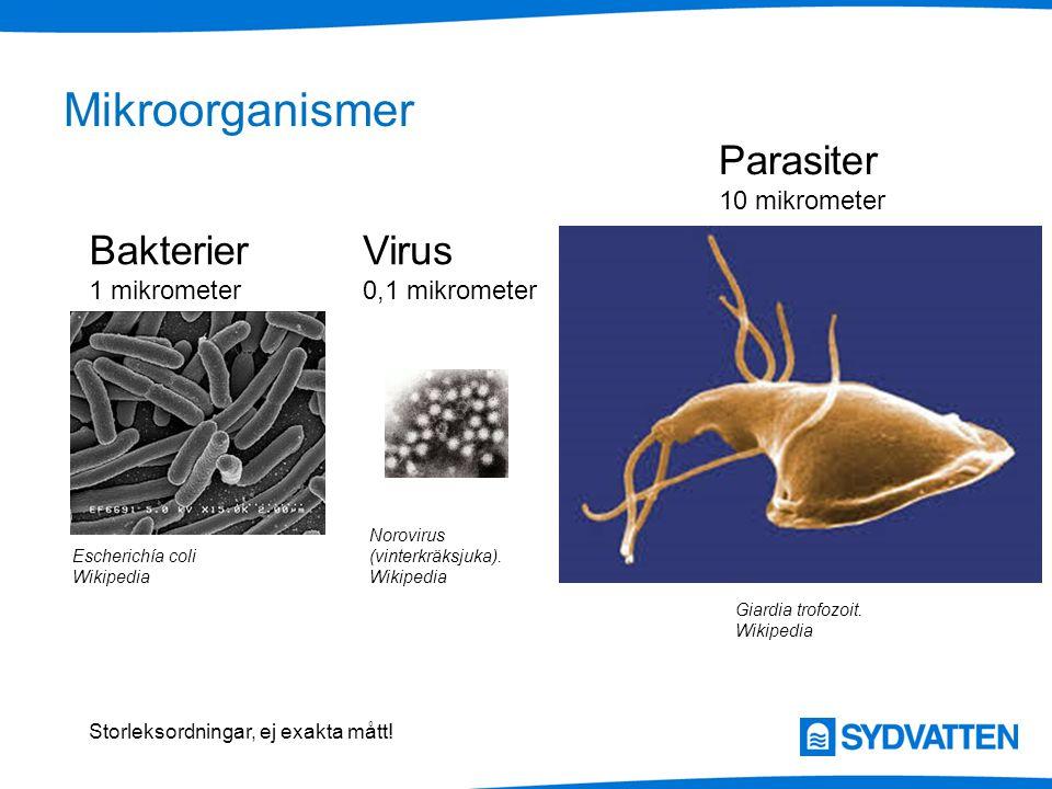 Mikroorganismer Parasiter Bakterier Virus 10 mikrometer 1 mikrometer