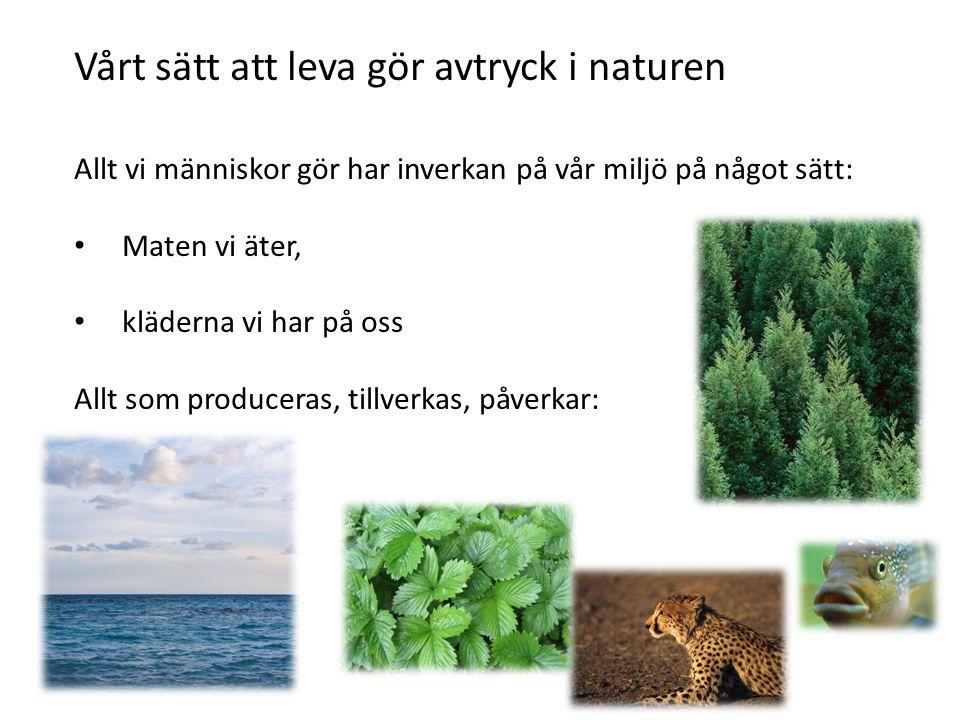 Vårt sätt att leva gör avtryck i naturen