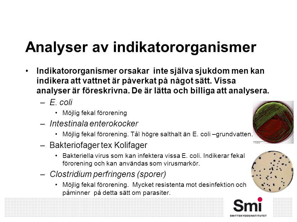 Analyser av indikatororganismer