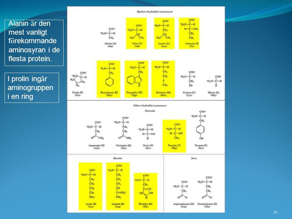 Alanin är den mest vanligt. förekommande. aminosyran i de. flesta protein. I prolin ingår. aminogruppen.