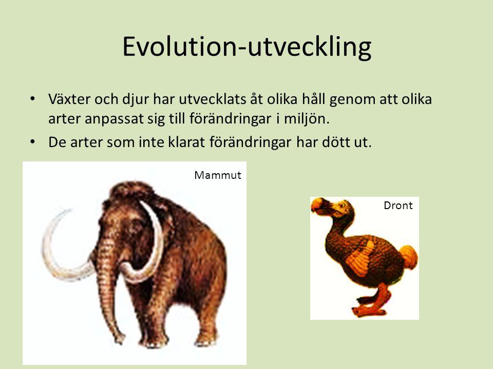 Evolution-utveckling