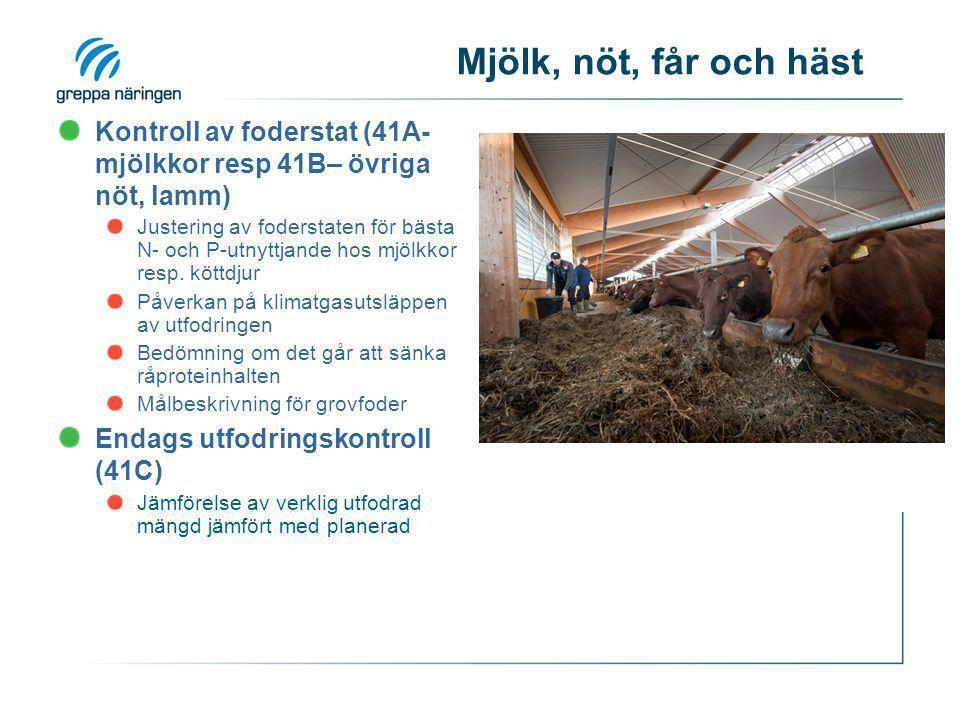 Mjölk, nöt, får och häst Kontroll av foderstat (41A- mjölkkor resp 41B– övriga nöt, lamm)