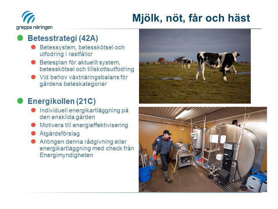 Mjölk, nöt, får och häst Betesstrategi (42A) Energikollen (21C)