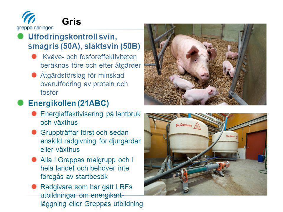Gris Utfodringskontroll svin, smågris (50A), slaktsvin (50B)