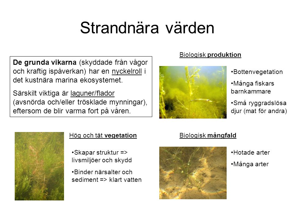 Strandnära värden Biologisk produktion.