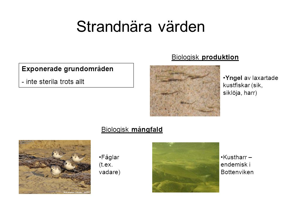 Strandnära värden Biologisk produktion Exponerade grundområden