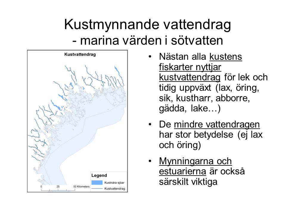 Kustmynnande vattendrag - marina värden i sötvatten