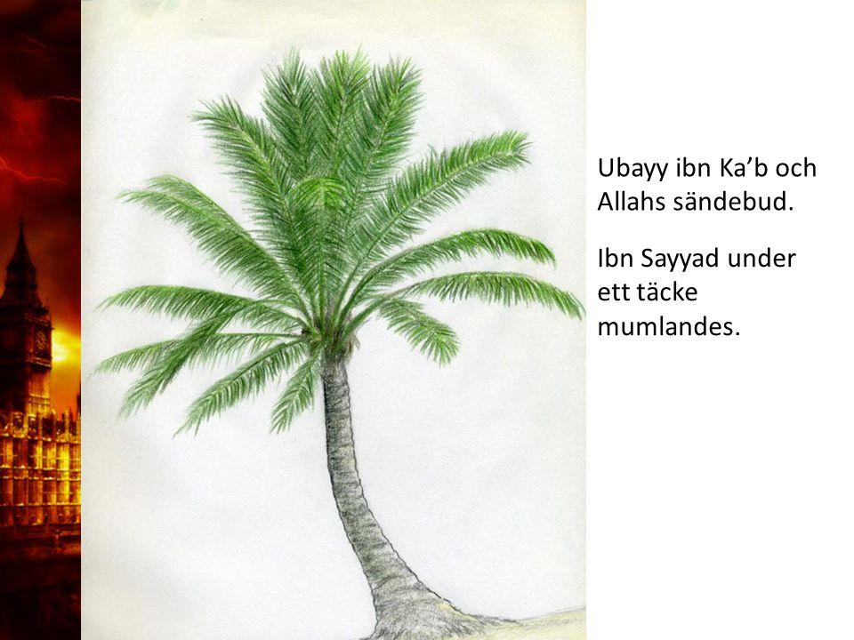Ubayy ibn Ka'b och Allahs sändebud.