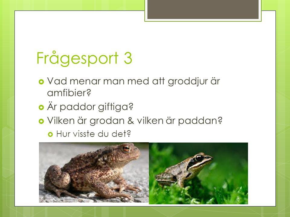 Frågesport 3 Vad menar man med att groddjur är amfibier