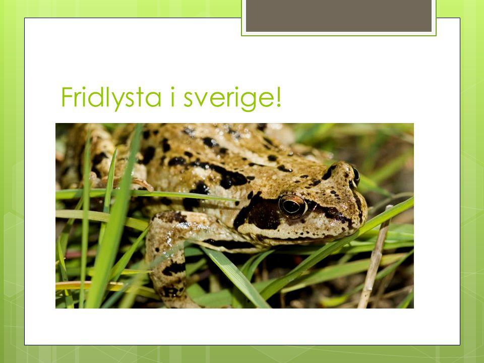 Fridlysta i sverige! Fridlysta = Man får ej döda / plocka med sig de svenska groddjuren hem.