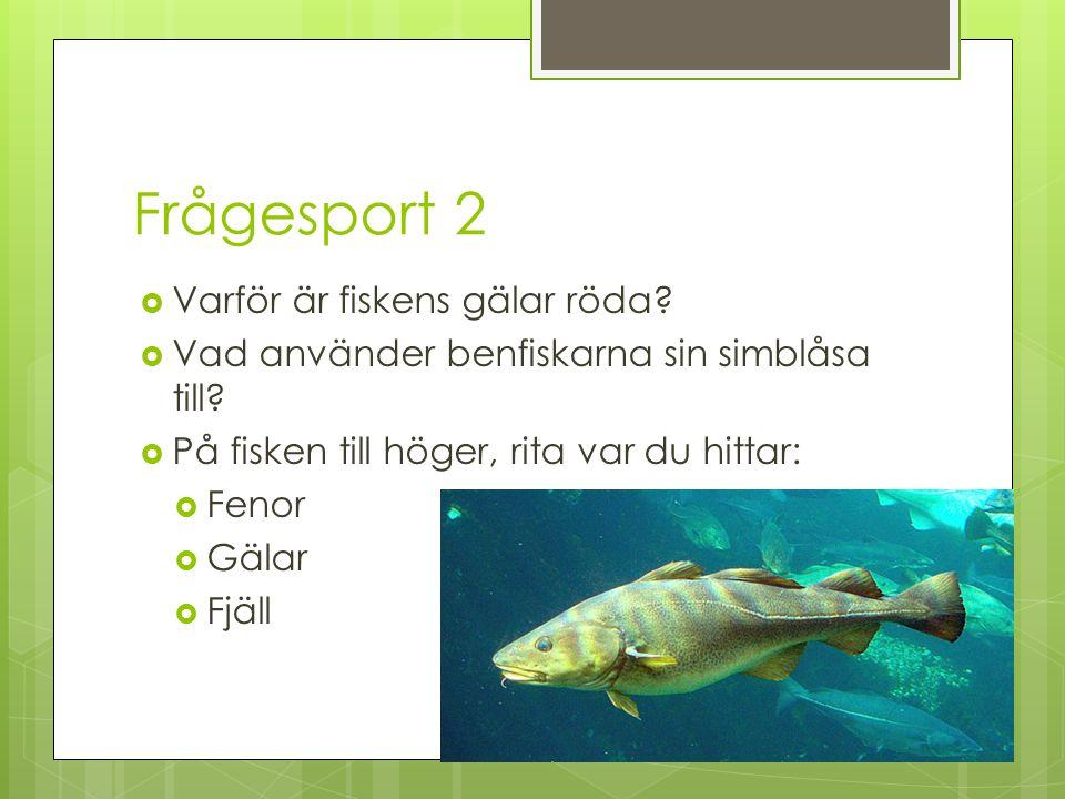 Frågesport 2 Varför är fiskens gälar röda