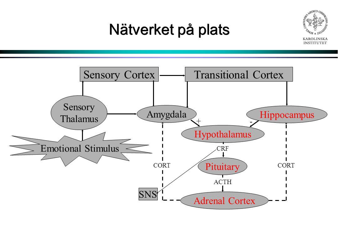 Nätverket på plats Sensory Cortex Transitional Cortex Sensory Thalamus