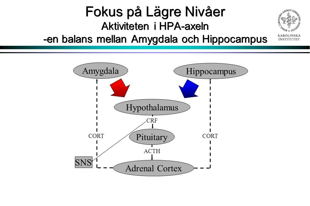 Fokus på Lägre Nivåer Aktiviteten i HPA-axeln -en balans mellan Amygdala och Hippocampus