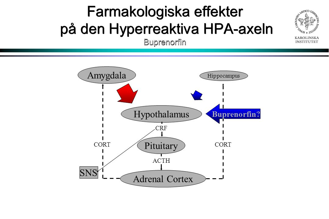 Farmakologiska effekter på den Hyperreaktiva HPA-axeln Buprenorfin