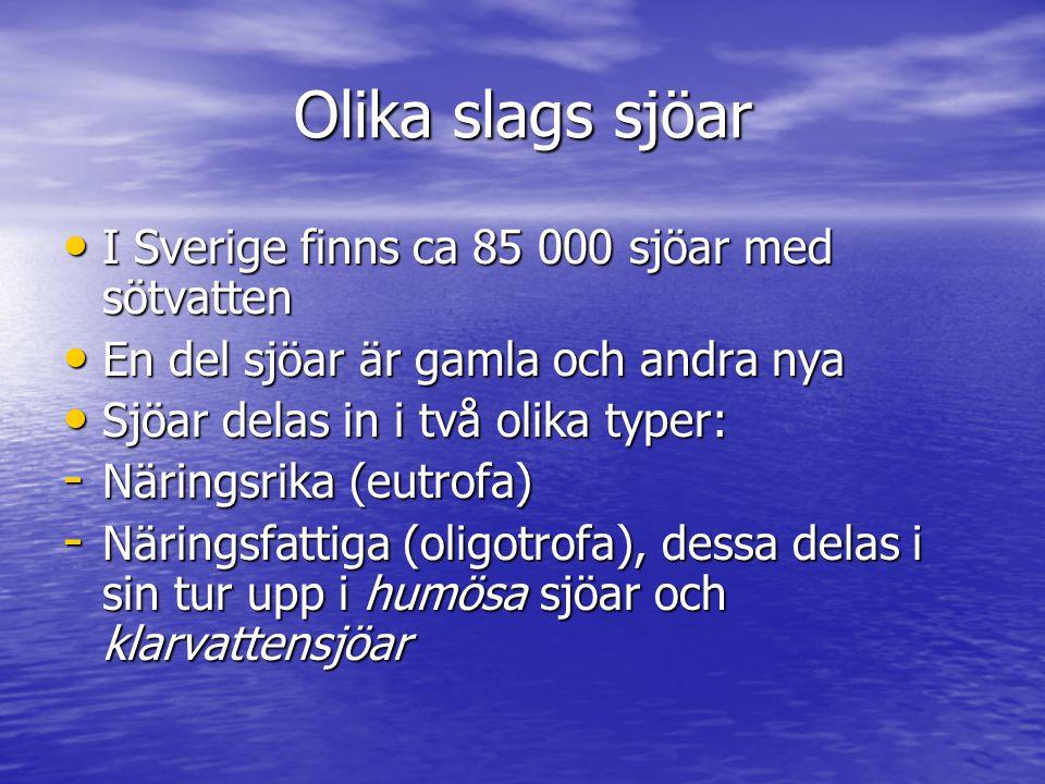 Olika slags sjöar I Sverige finns ca 85 000 sjöar med sötvatten