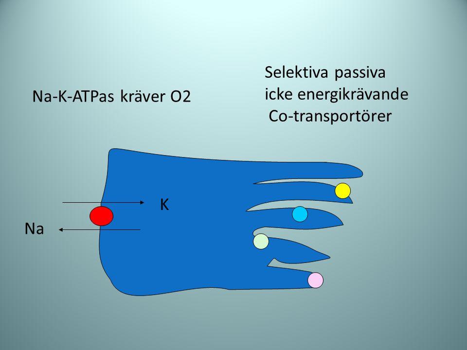 Selektiva passiva icke energikrävande Co-transportörer Na-K-ATPas kräver O2 K Na