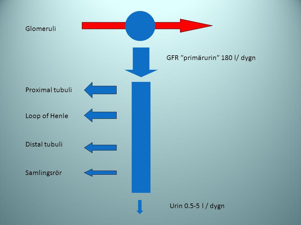 GFR primärurin 180 l/ dygn
