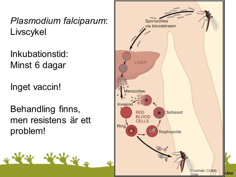 Plasmodium falciparum: Livscykel Inkubationstid: Minst 6 dagar