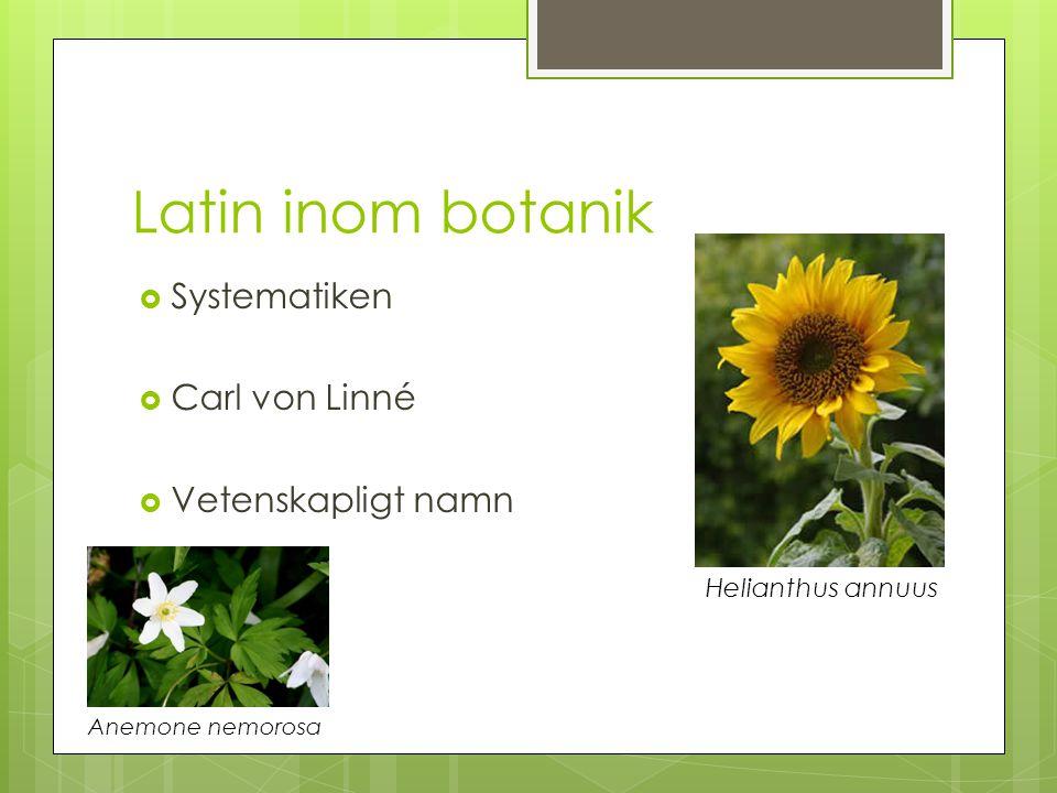 Latin inom botanik Systematiken Carl von Linné Vetenskapligt namn