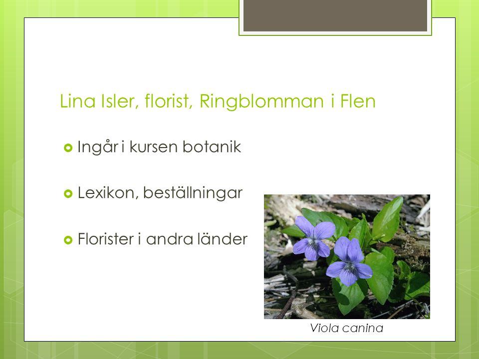 Lina Isler, florist, Ringblomman i Flen