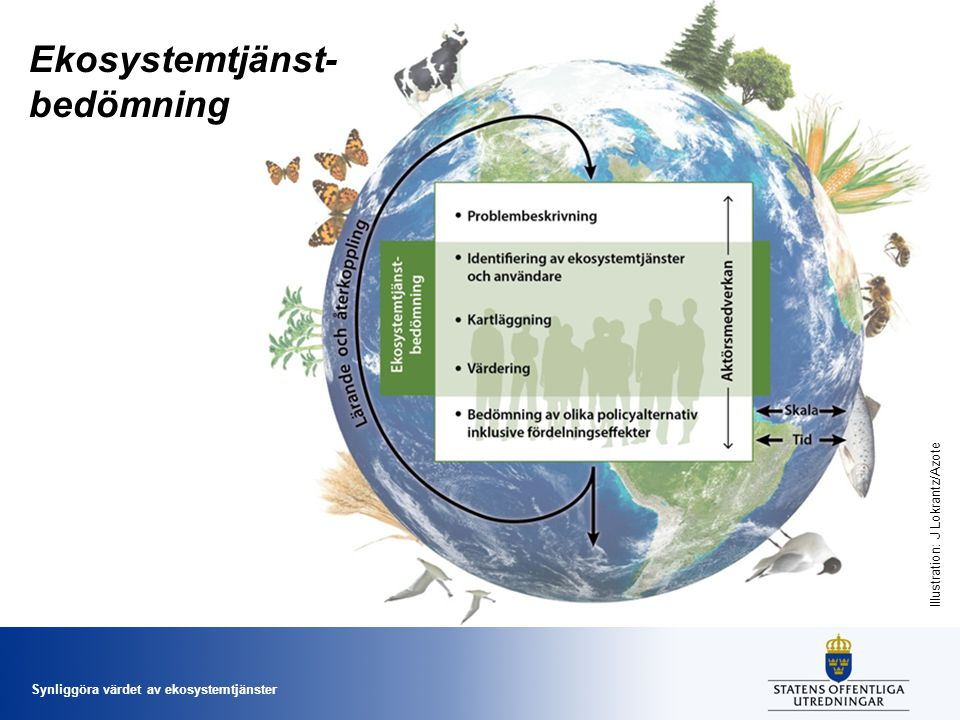 Ekosystemtjänst- bedömning