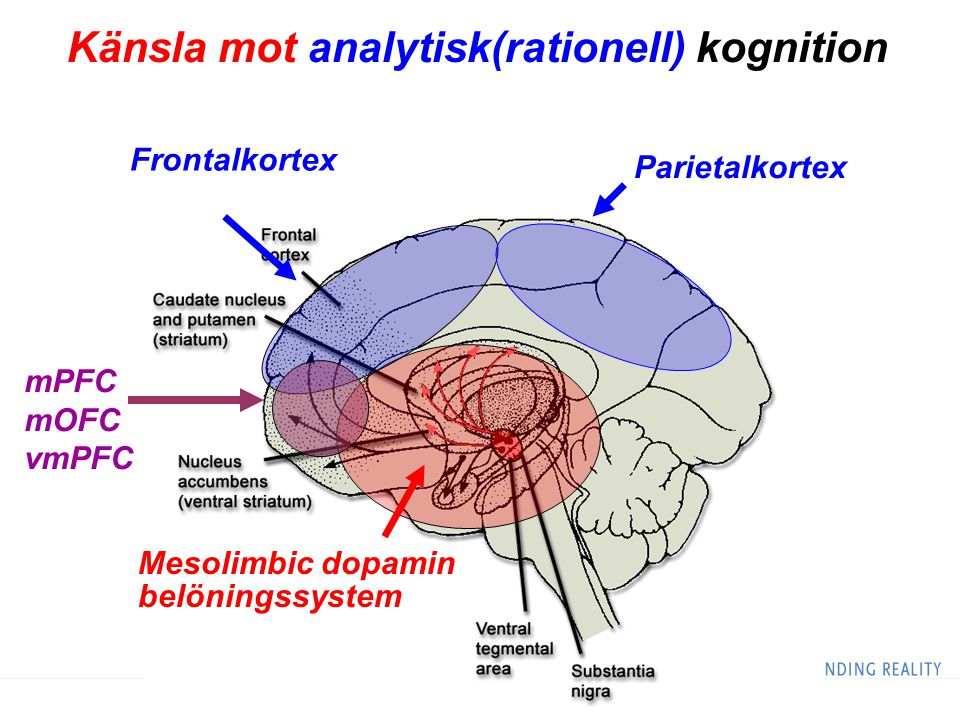 Känsla mot analytisk(rationell) kognition