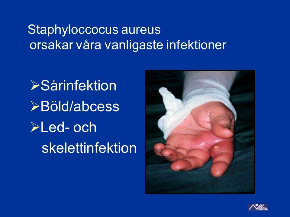 Staphyloccocus aureus orsakar våra vanligaste infektioner