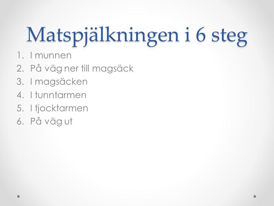 Matspjälkningen i 6 steg