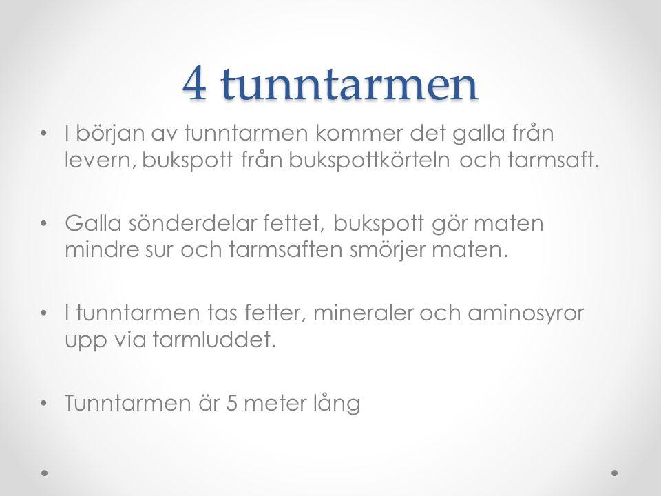 4 tunntarmen I början av tunntarmen kommer det galla från levern, bukspott från bukspottkörteln och tarmsaft.
