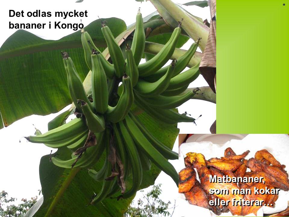 Det odlas mycket bananer i Kongo
