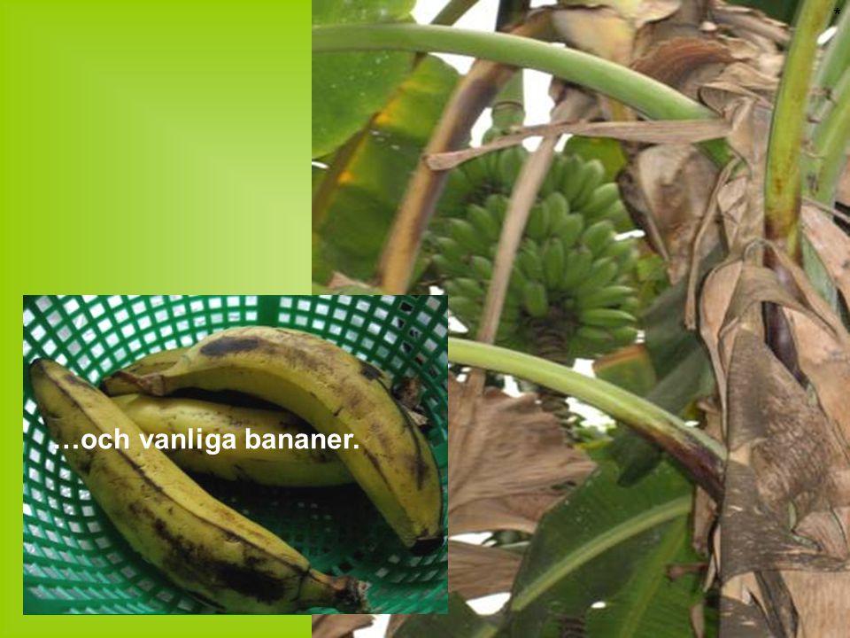 * …och vanliga bananer.