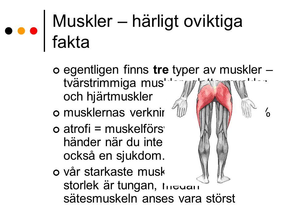 Muskler – härligt oviktiga fakta
