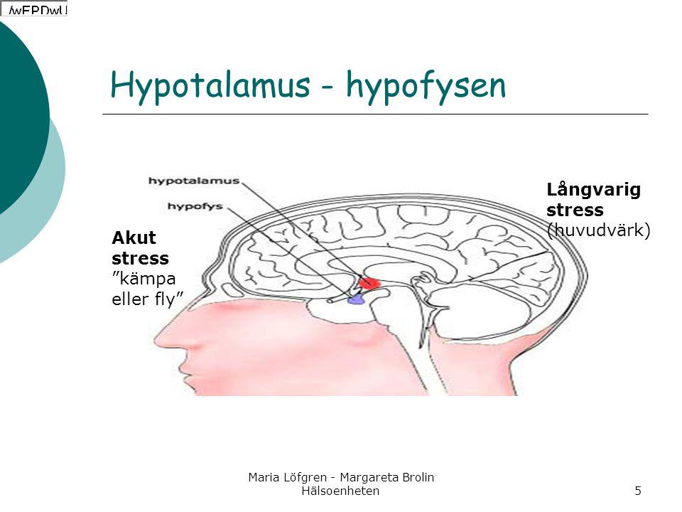 Hypotalamus - hypofysen