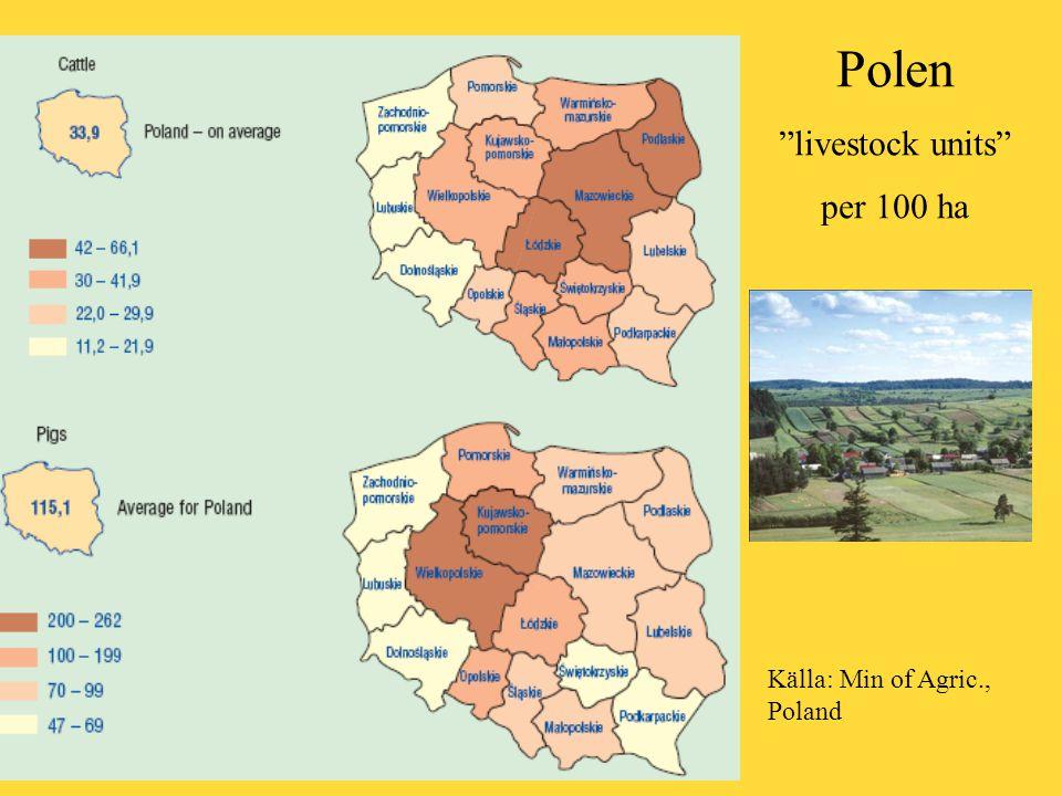 Polen livestock units per 100 ha Källa: Min of Agric., Poland