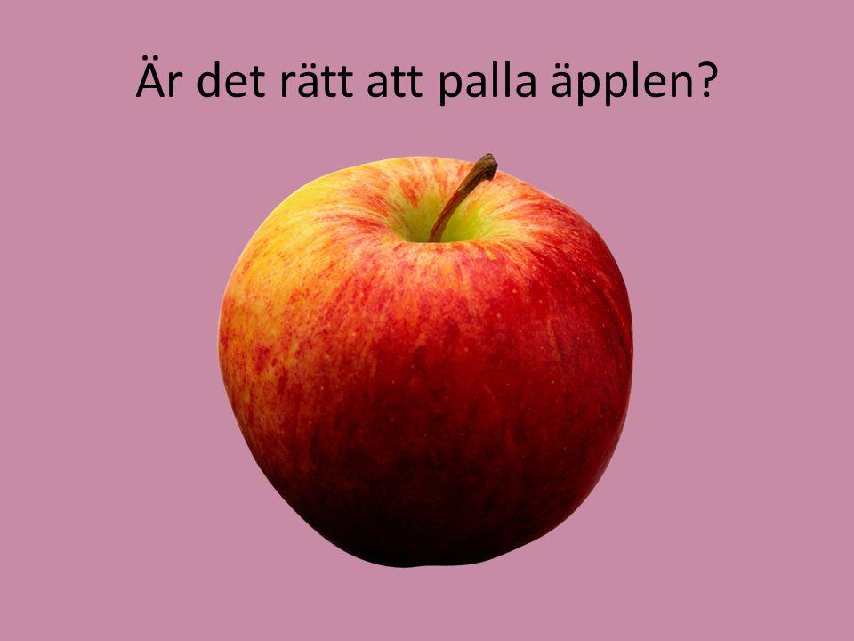 Är det rätt att palla äpplen