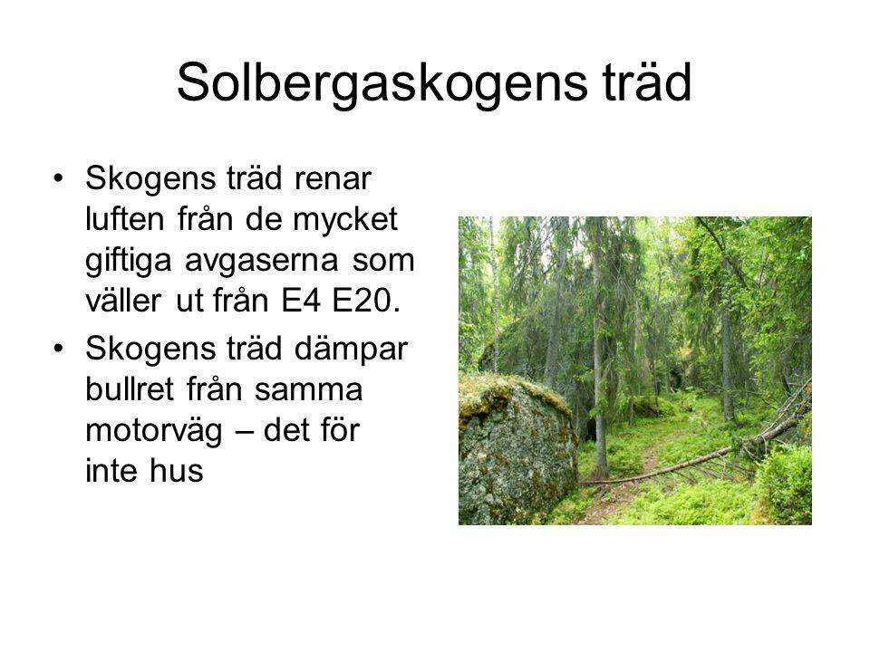 Solbergaskogens träd Skogens träd renar luften från de mycket giftiga avgaserna som väller ut från E4 E20.