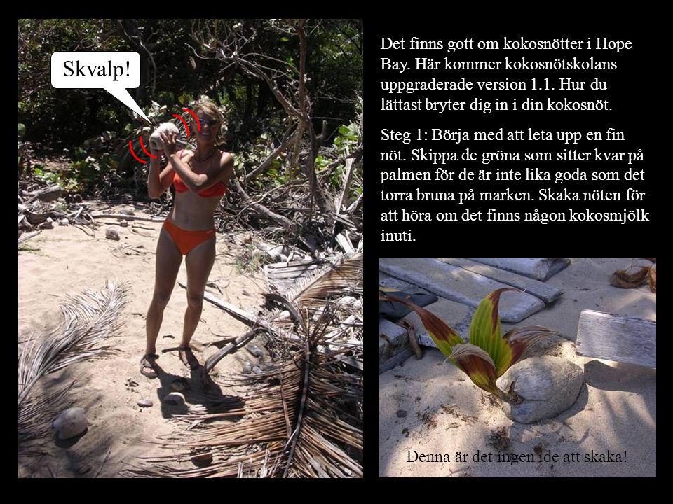 Det finns gott om kokosnötter i Hope Bay