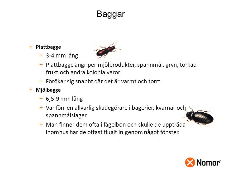 Baggar Plattbagge. 3-4 mm lång. Plattbagge angriper mjölprodukter, spannmål, gryn, torkad frukt och andra kolonialvaror.