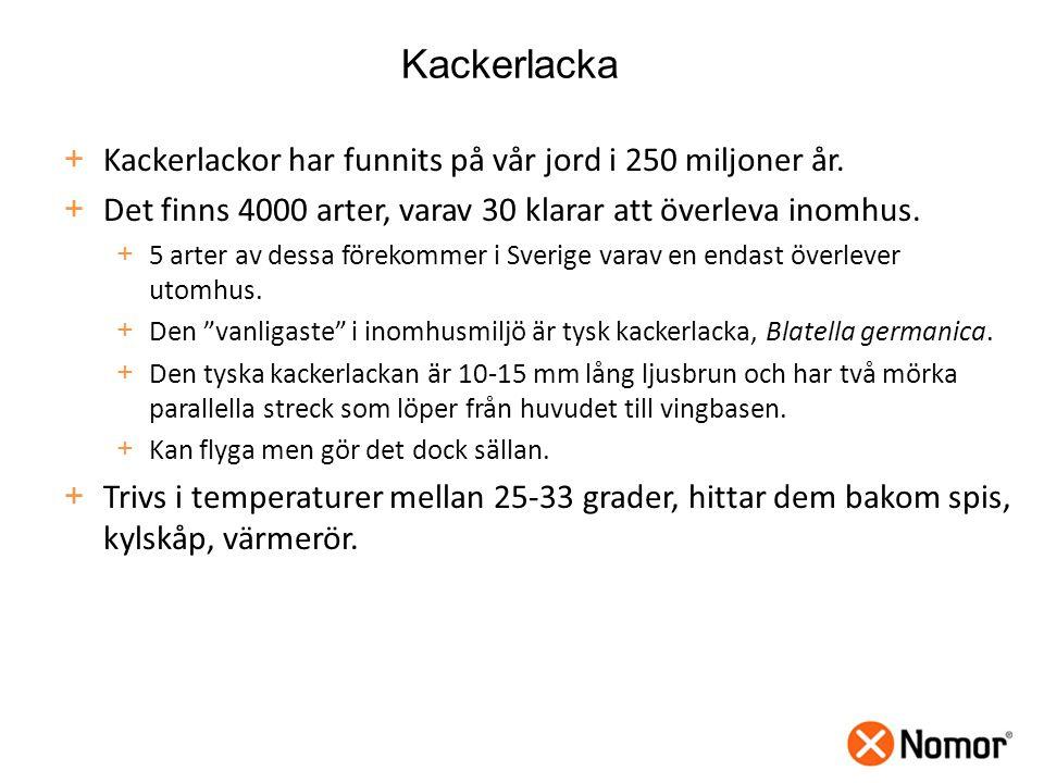 Kackerlacka Kackerlackor har funnits på vår jord i 250 miljoner år.