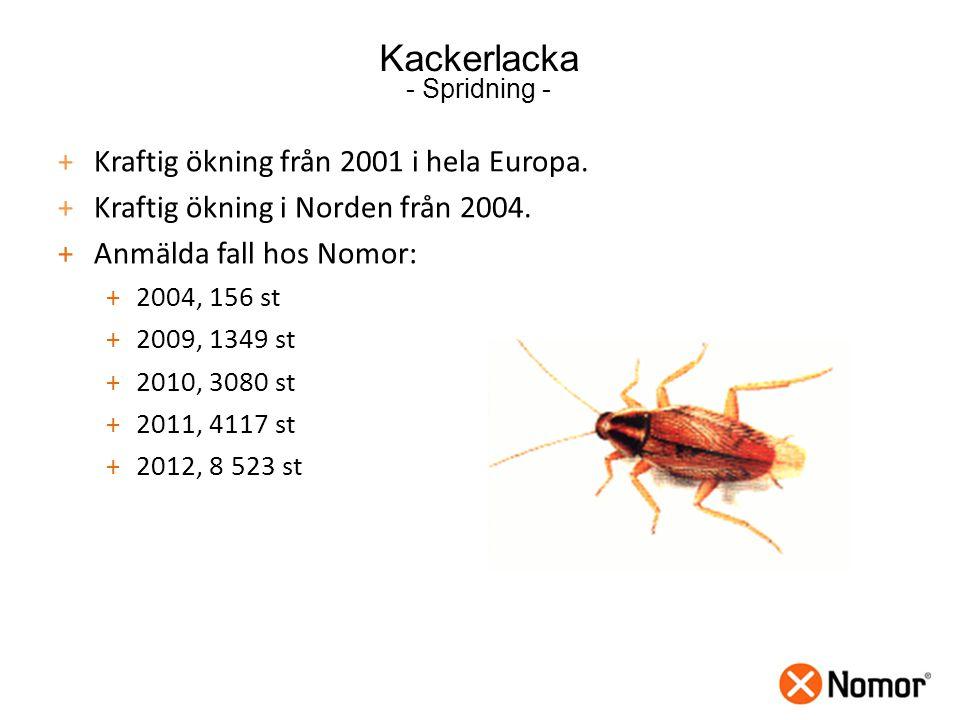 Kackerlacka - Spridning -