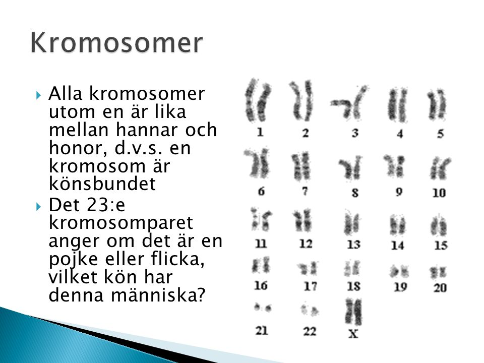 Kromosomer Alla kromosomer utom en är lika mellan hannar och honor, d.v.s. en kromosom är könsbundet.